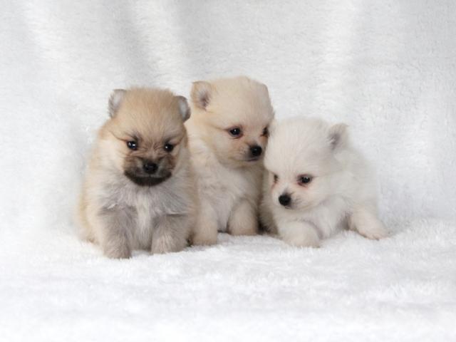 雪かきスコップの重さは子犬1匹ぶんくらい